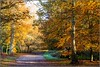 7D2_4464-Edit (Colin RedGriff) Tags: autumn virginiawater englefieldgreen england unitedkingdom gb