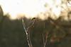 Bird on a ...........? (seegarysphotos) Tags: garylewis seegarysphotos greattit daisynook morning tree birds finches twigs sticks nature outdoors sky
