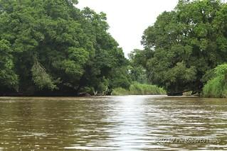 Forest in Tortuguero