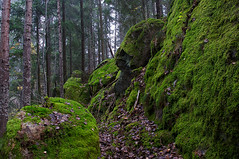 Moss-land (Stefano Rugolo) Tags: stefanorugolo pentax k5 moss landscape longexposure woodland forest tree rock stone sweden sverige hudiksvall smcpentaxda1855mmf3556alwr path hälsingland