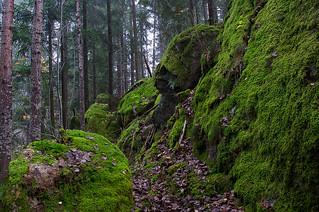 Moss-land