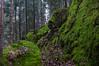 Moss-land (Stefano Rugolo) Tags: stefanorugolo pentax k5 moss landscape longexposure woodland forest tree rock stone sweden sverige hudiksvall smcpentaxda1855mmf3556alwr path hälsingland