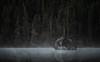 Darkness, String Lake (reinaroundtheglobe) Tags: stringlake grandtetonnationalpark wyoming usa nationalpark fog trees dark rockobject waterreflections reflection