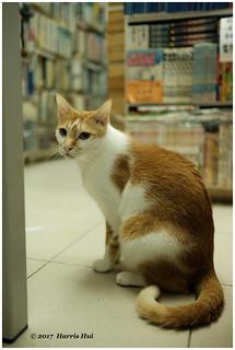 The Cat Bookstore - Hong Kong XP7078e
