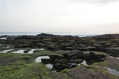 Ocean shore Tanah Lot, low tide, stones covered with seaweed (anastasia r) Tags: bali indonesia background cliff coastline earth green ground hinduism island landscape lowtide lowwater nature ocean oceanfloor relief rocky rough sea seaweed shore stones sun sunlight sunset tanahlot temple terrain texture textured water waves