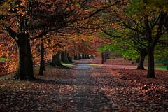 Beautiful autumn park ... (Julie Greg) Tags: park nature autumn grass leaf 2017 canon tree way colours landscape