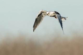 A Fall Kite