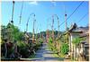 Penglipuran ©et ses Penjor installés pour Galungan (philippedaniele) Tags: penglipuran villagetraditionnel penjor arches de bambous