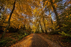 The golden path (wimvandemeerendonk, back home) Tags: amersfoort autumn color colors colours colour forest goldenhour gold light netherlands nederland outdoors outdoor orange provincieutrecht park sony tree trees thenetherlands wimvandem fall