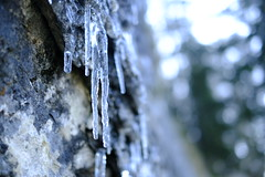 Eiszapfen (rosenblume75) Tags: pendling eiszapfen outdoor natur eis kalt herbst winter berge makro