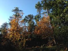 05 (emmess2) Tags: campiglia cinqueterre spezia autumn fall leaves