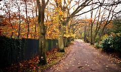 Autumn Vacation (farmspeedracer) Tags: november forest path road way alley tree foliage nature outside brown leaf leaves silence isolation