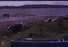 80 swans on Lough, Moss fringe. Kilfenora. 1988 (Mary Gillham Archive Project) Tags: 17516 1988 bird burren countyclare cygnussp ireland kilfenora swan