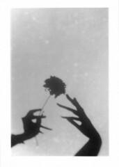 Living Shadows #4 (eight eight eighty) Tags: livingshadows shade shadow monstera plants leaf hands canonae1 35mm argentique bnw blackandwhite silverprint diy shootingfilm selfprint tmax400 muse rose peonies flowers 花