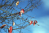 Till Death Do Us Part (Magnus Bergström) Tags: diax diaxia ia fujicolorsuperia100 fujicolor fuji superia 100 superia100 sweden sverige karlstad haga värmland tree sky leaves color colors branch branches autumn höst death life circle