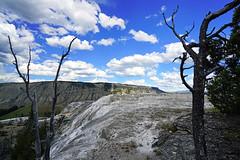 Fancy dry trees on Mammoth Springs, Yellowstone NP, USA (Andrey Sulitskiy) Tags: usa wyoming yellowstone