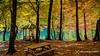turquoise in the autumn / 301117387 (devadipmen) Tags: autumn bolu forest landscape landscapephotographer nationalpark naturepark naturephotographer orman sevenlakes sonbahar türkiye waterfall yedigöller şelale