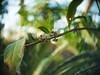 Bokeh Berries (Greg Jarman) Tags: olympus ep2 c mount adapted lens micro four thirds cctv bokeh plant closeup macro berries stick red fujian 25mm 14