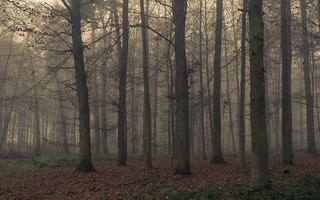 Misty Eifel Forest