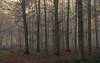 Misty Eifel Forest (Netsrak) Tags: baum bäume eifel europa europe herbst landschaft natur nebel wald autumn fall fog landscape mist nature woods
