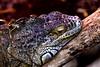 Reptil - Luisenpark Mannheim (Stefan - Pictures) Tags: nikon d5600 sigma 18300mm reptil luisenpark mannheim tier