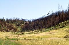 Fire16.tif (NRCS Montana) Tags: fire forestfire babydeanfire seeding