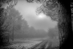 Fog in the forest (lgonzaloro) Tags: forest fog foggy nature landscape tree path background abstract season light green fear beautiful magic misty sun horror night road dark outdoor wood mystery autumn blackandwhite bw spain