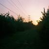 Powered sunset (sam.naylor) Tags: portra 400 rolleicord vintage lens camera box tlr medium format film 120 landscape nature trees sunset sun sky