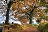 Camino en Latores (ccc.39) Tags: asturias latores oviedo camino otoño otoñal hojarasca castaño árbol paisaje autumn tree landscape