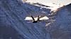 Axalp17_Sani# 0784 (Luigi Sani) Tags: aviazione aerei airplanes aviation aeronautica airshow aerobatic airplane svizzera axalp meiringen brienz berna f18 hornet fa18hornet f5 tiger mountain