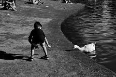 pibe y pato (nacho.kai) Tags: niño nene kid pato duck animal persona people street lago lake black white light dark nature agua tierra