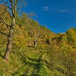 Autumn near Bad Blankenburg thumbnail
