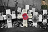 Remembrance, Darlaston 10/11/2017 (Gary S. Crutchley) Tags: the great war world one i 1 first darlaston memorial poppy cross ypres arras somme flanders western front uk britain england united kingdom urban town townscape walsall walsallflickr walsallweb black country blackcountry staffordshire west midlands westmidlands nikon d800 history heritage local night shot nightshot nightphoto nightphotograph image nightimage nightscape time after dark long exposure evening travel street slow shutter raw 1635mm f40g af s ed nikkor colour color pop selective