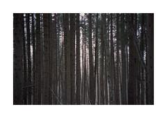 (Dennis Schnieber) Tags: 35mm kleinbild analog film bulgaria rila
