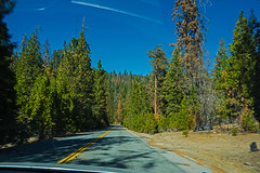 On the Road Into the Woods (dog97209) Tags: on road into woods heading sequoia nation park california bug splatter