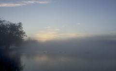 IMG_6250 (Sula Riedlinger) Tags: frost frostymorning sunrise sunriseinrichmondpark mistysunrise mist misty foggy greaterlondon londonroyalparks royalparks royalpark richmondpark richmond surrey bigsky weather