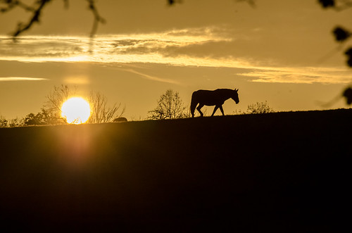 das Pferd und die Sonne