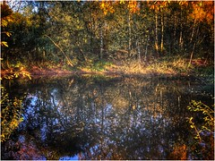 Isolated (andystones64) Tags: autumnal autumn silica pond water overflow nature naturephotography trees bushes reeds foilage scunthorpe lincolnshire nlincs northlincs outdoors outside image imageof imagecapture sky reflections