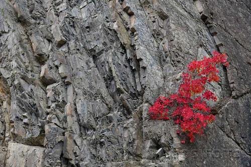 Ananuri - szikla07