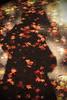 shadow (mizuk@) Tags: japan gifu autumn maple leaves colorful canon 岐阜 美濃 もみじ谷 紅葉