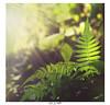 _MG_3516 (sa hadi) Tags: macro nature light life landscape leaf background black bangladesh sa sahadi sahadi33 hadi blue tree photography photo green bokeh