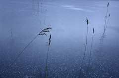 Gjeddvatnet (Thai Font Issue) Tags: lake frozen nature blue minimal grass ice frost norway norge landscape
