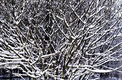 first snow (larrynunziato) Tags: snow tree winter nature abstract