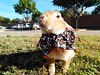 Scooter (special needs rabbit) (tammybeck) Tags: rabbit rescuedrabbit specialneedsrabbits lapin conejo krolik scooter