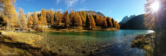 Lai da Palpuogna (Vincent_Thonnart) Tags: lai da palpuogna palpuognasee oberengadin herbst autumn graubünden grisons automne mélèze panorama bergün