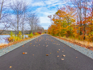 Scattered Leaves On The Rail Trail