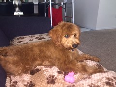 Ruby Red's Ruby in her forever home!