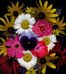 58621.01 bouquet (horticultural art) Tags: horticulturalart bouquet flowers