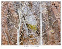 Cliff Face and Bare Aspen Trees (G Dan Mitchell) Tags: eastern sierra nevada bishop creek north lake aspen bare autumn tree trunks branches cliff face rocky granite nature landscape california usa america