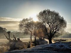 Mist Rising (Gilder Kate) Tags: richmond richmondpark richmonduponthames beverleybrook mist misty frost frosty morning panasoniclumixdmctz70 panasoniclumix panasonic lumix dmctz70 tz70 royalparks